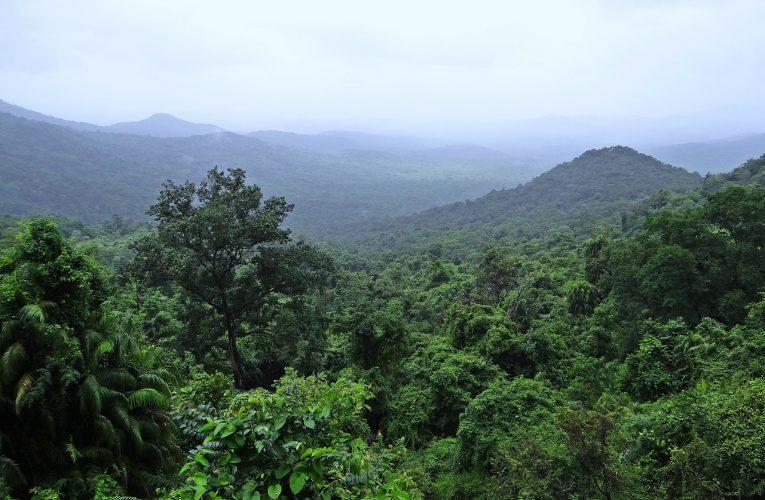 Les parcs indiens à explorer durant un voyage de découverte
